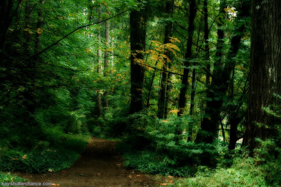photoblog image forest trail