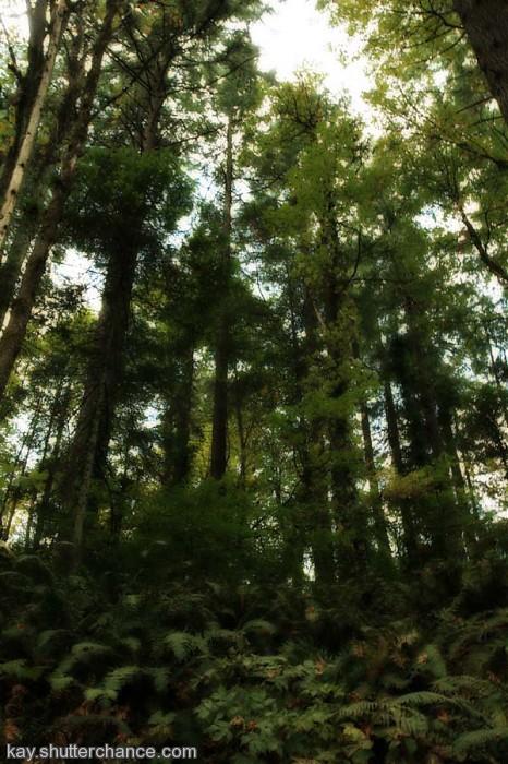 photoblog image forest of green