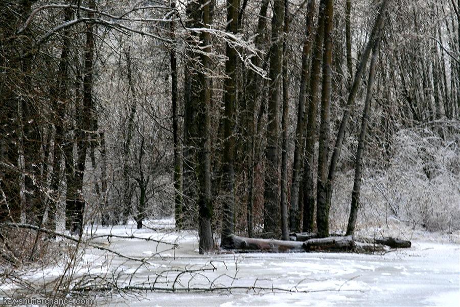 photoblog image forest of ice, January 2008