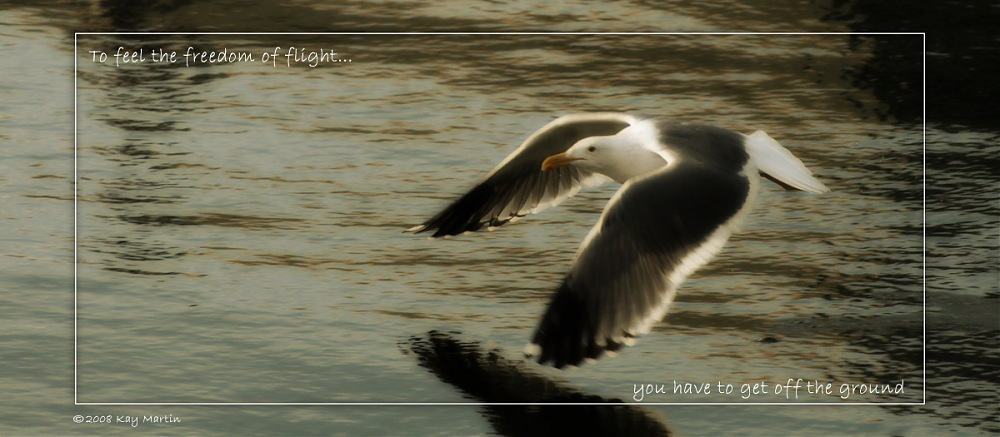 photoblog image fly like a seagull