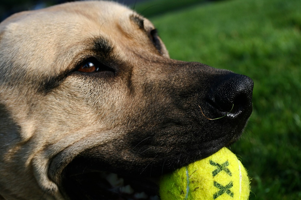 photoblog image Mozzy and his favorite ball.