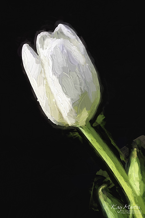 photoblog image Painted Tulip