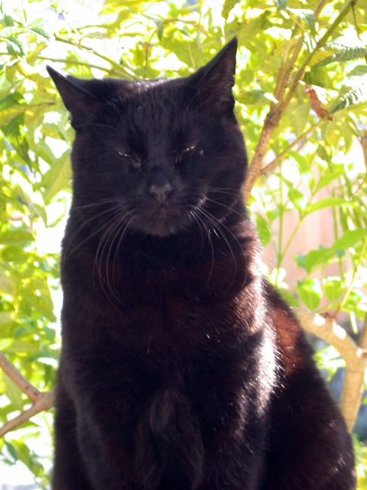 photoblog image Black Cat, King of Front Street and the Alley