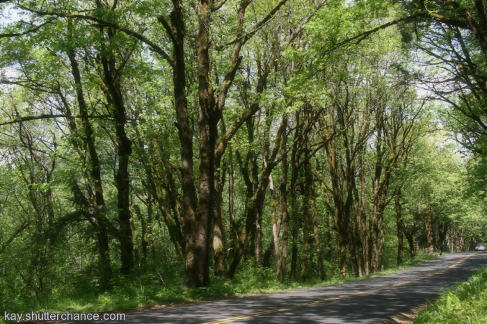 photoblog image The Historic Columbia River Highway
