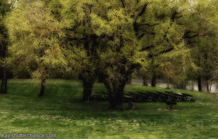 photoblog image Picnic Grounds, Molalla River State Park, Oregon