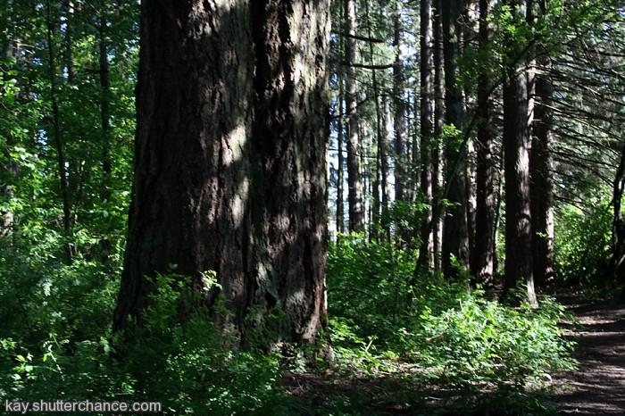 photoblog image an oregon grove