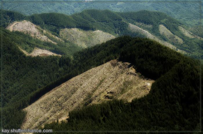 photoblog image Clearcutting in Oregon